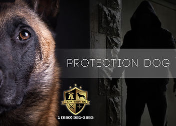 PROTECTION DOGS_9.jpg