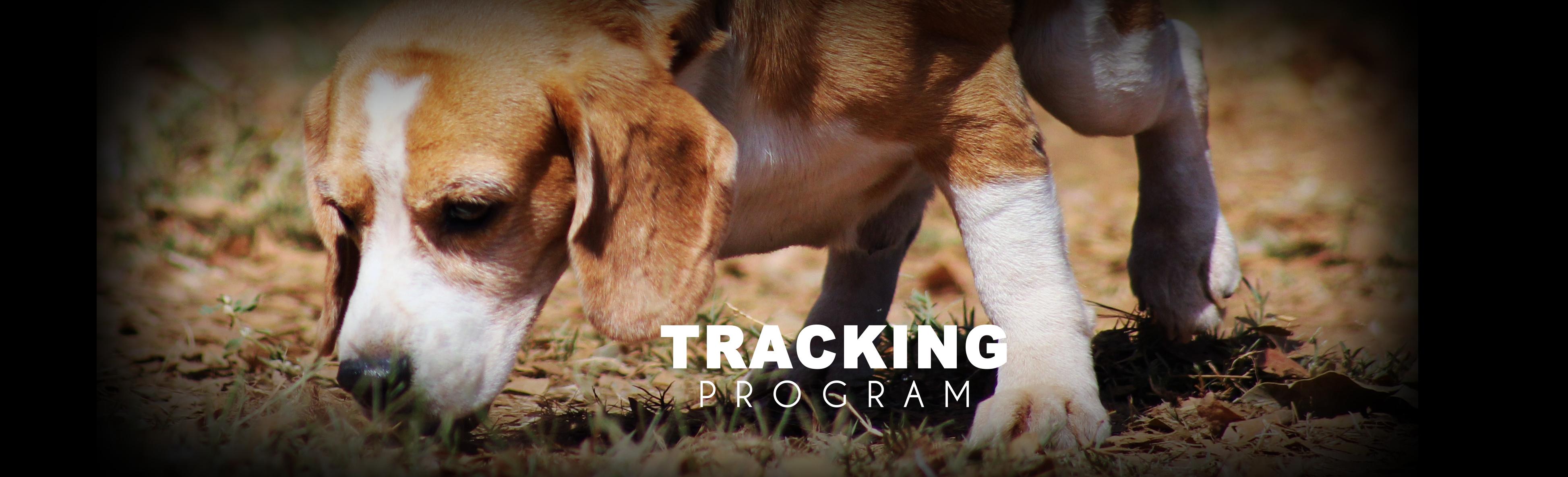Certified Dog trainer School