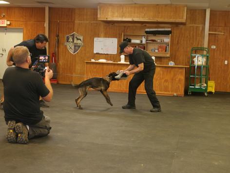Global Dog Training Club