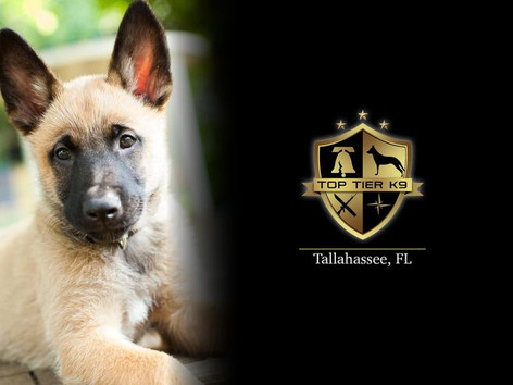 The Best Pet Training in Tallahassee