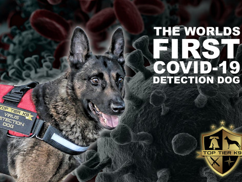 Virus Detection Dogs are attacking COVID-19