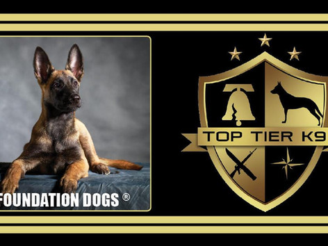Learn to train dogs from the best in the world