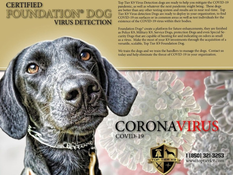 Learn how to train your own COVID-19 detection Dog