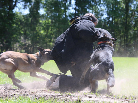 Police, Military, Service and Protection K9 Opportunities