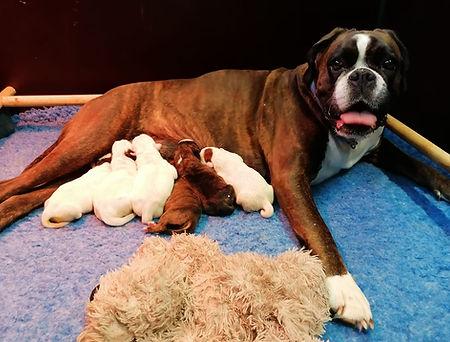 Pups nest U.jpeg