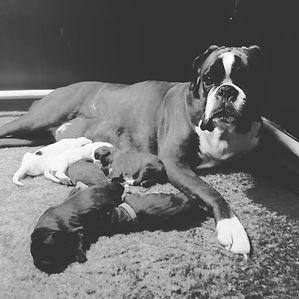 Qwin met pups.jpg