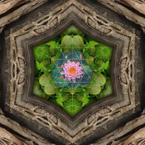 lotuswindow.jpg