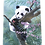 Panda Bear Decorative Wood Hanging Plaque by Prints Charming