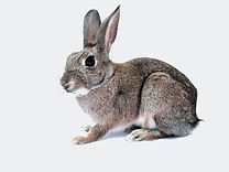 rabbit-740621_1920.jpg