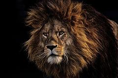 lion-3574819_1920.jpg