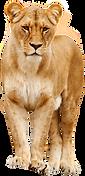 lion-2262719_1920.png