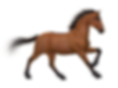 horse-1984136_1920.png