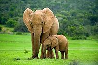 young-elephant.jpg