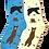 Foozy's Bear Socks