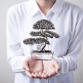 Un bonsai per tutti.