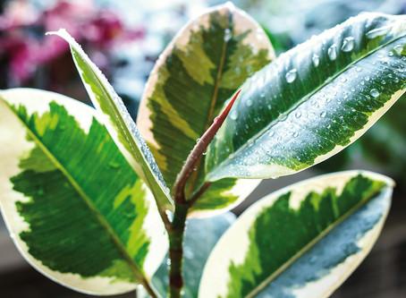 Il verde indoor per respirare meglio.