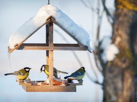 Cibo e casette per gli uccellini.