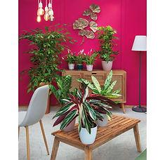 piante da interno.jpg