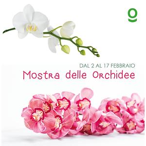 mOSTRA DELLE ORCHIDEE2_Tavola disegno 1