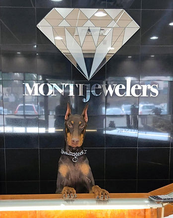 A dog in Monti Jewelers