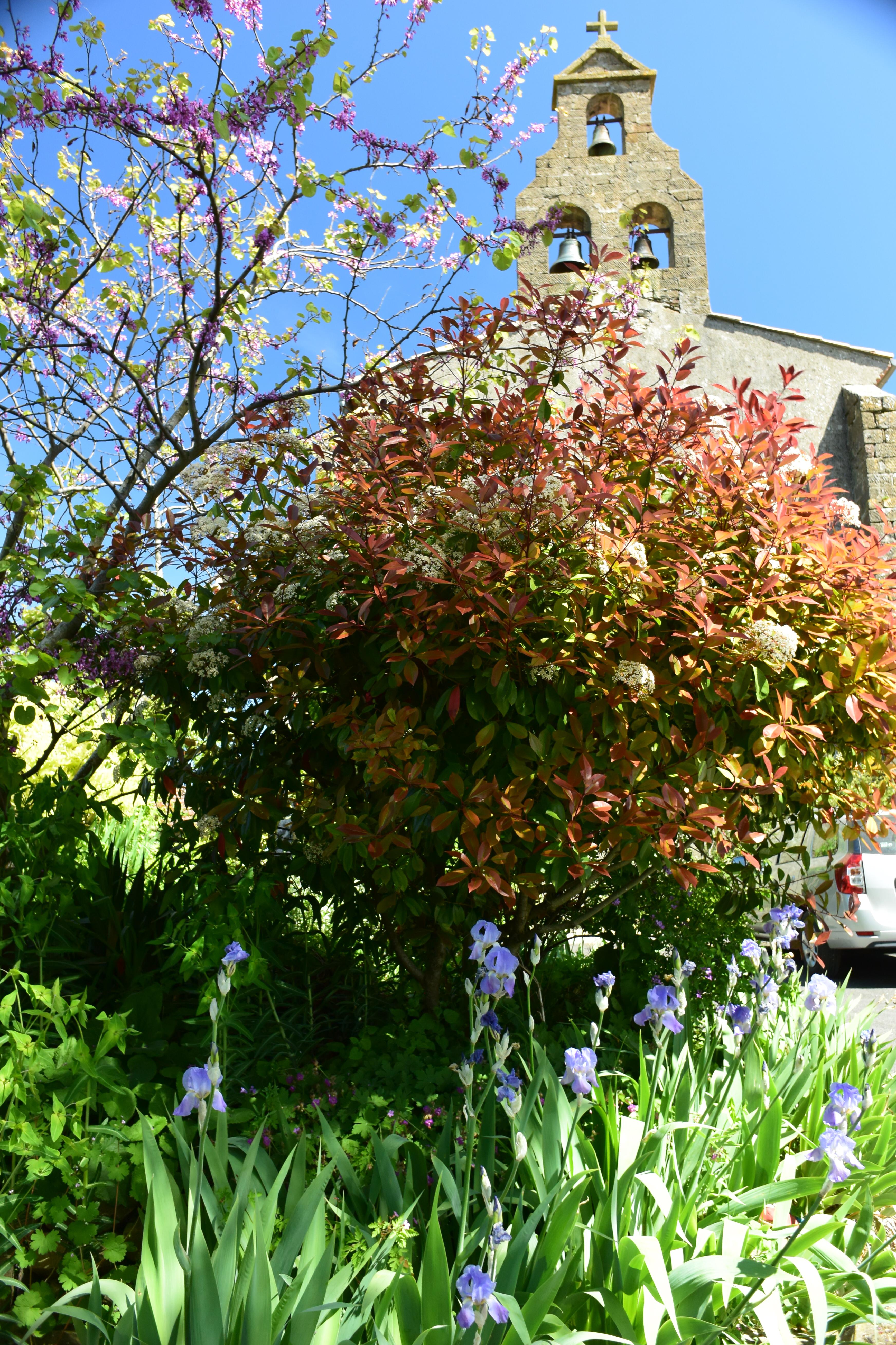 Tree in bloom near Mirepoix