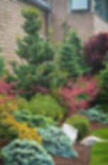 garden picture evergreen.jpg