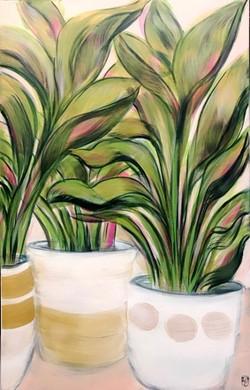Pot Plants 2