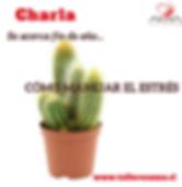 Flyer_Charla_Estrés.png