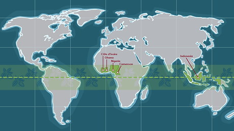 Cocoa-production-world-map.png