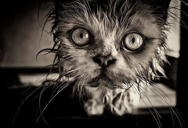 underweather kitten.jpg