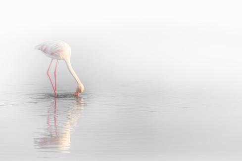 Fog Dancer