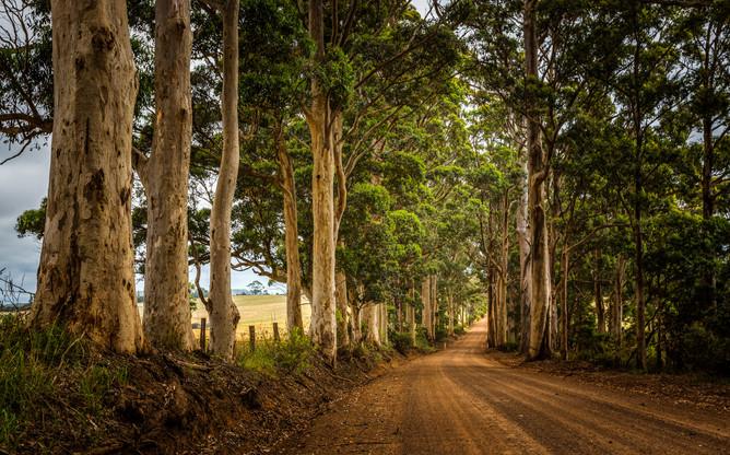 Karri Tree Road