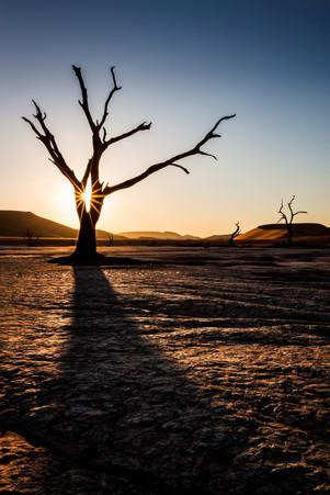 The Dead Desert