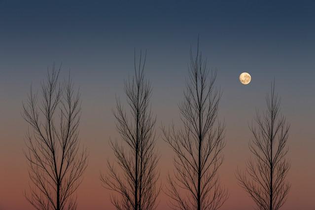 Bare Leaves, Full Moon & a Slight Breeze