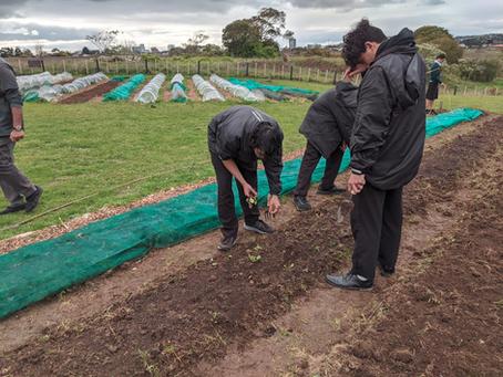 Te Maara Kai o Wirihana (Manurewa Community Garden) Update