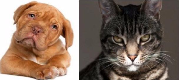 Dog or Cat?