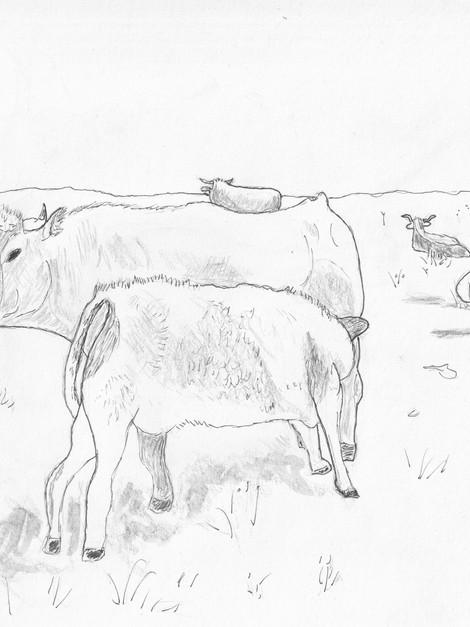 Self Portrait with Aubrac Cows
