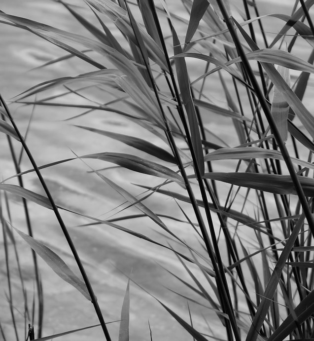 Reedsslapton.jpg
