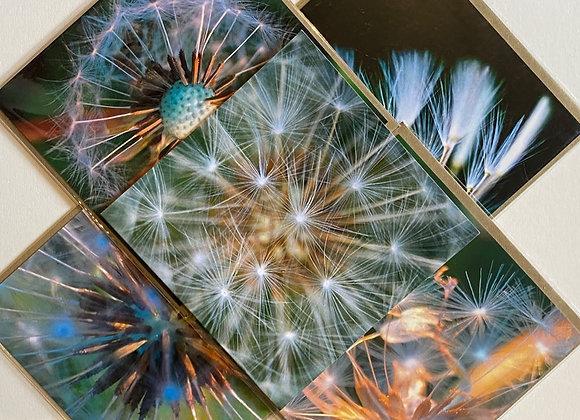 Pack of 5 Greetings Cards - Dandelions
