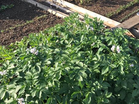 Fertilisers – Part One