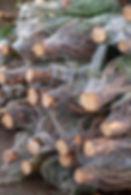 xmastrees-10.jpg