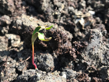 Soil – what is it? Part One.....