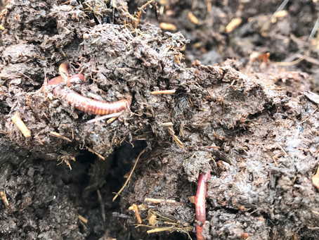 Soil – do you need to improve it? Part Two.....