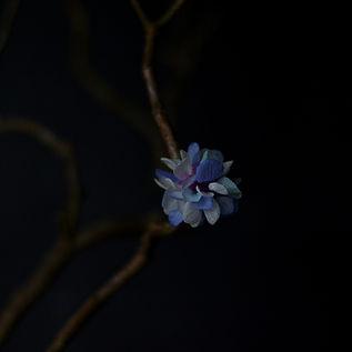 yomihana-mitosebana-