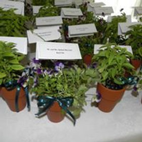 Herb Pot Favors