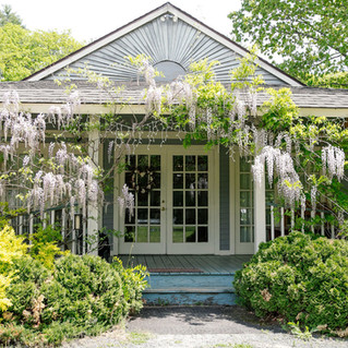 Wisteria Blooming at Hartman's Dining Room