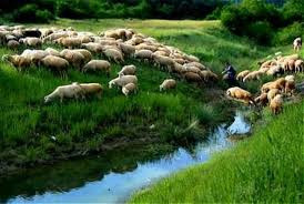 The grass is always greener where the Good Shepherd tends his flock