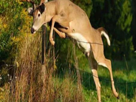 Isaiah 35:4-7a - Leaping like a deer while singing with joy