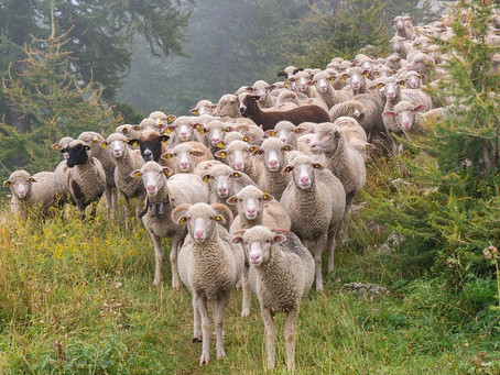 Jeremiah 23:1-6 - Woe to all who scatter the sheep of God's flock