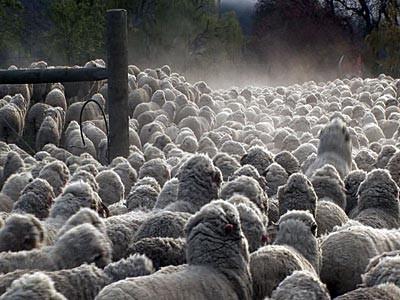 Mark 6:30-34, 53-56 - The making of a shepherd